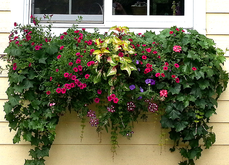 & 5 Easy Window Flower Box Ideas for Every Cleveland Home Aboutintivar.Com